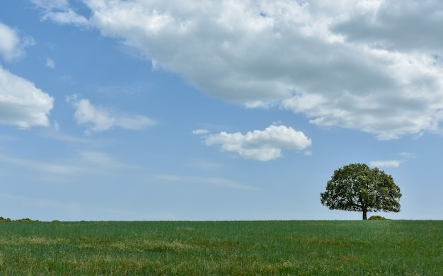 Solated tree in meadow with blue and cloudy sky, salamanca, spain