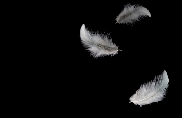 Solf white feathers falling down in the dark.