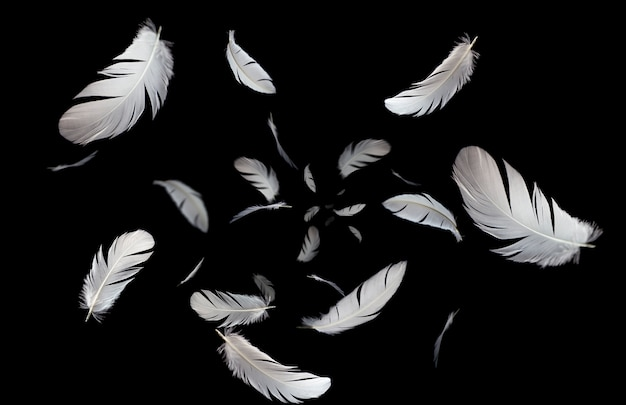 Solf white feathers floating in the dark.