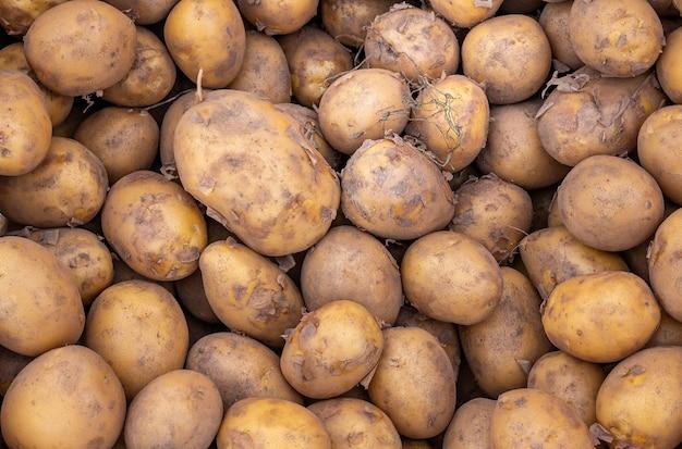 Сплошной фон из свежего спелого и натурального картофеля. вид сверху