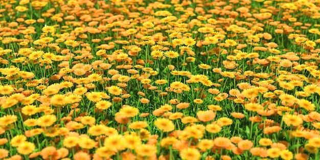 黄色い花のクローズアップの固体カーペット、3dイラスト
