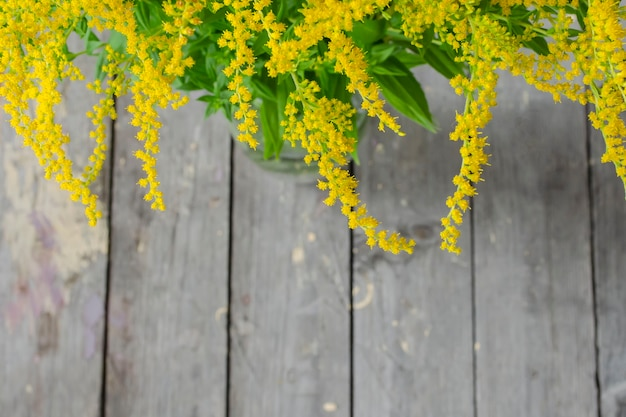 Solidago virgaurea, 유럽 갈 조색 또는 woundwort는 국화과의 초본 다년생 식물입니다. 흐린 배경