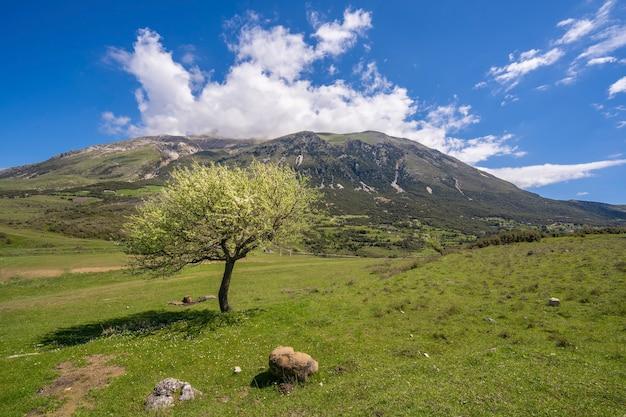 牧草地に白い花が咲き、背景に暗い森の丘がある孤独な栗の木。アルバニアの自然からの風景。