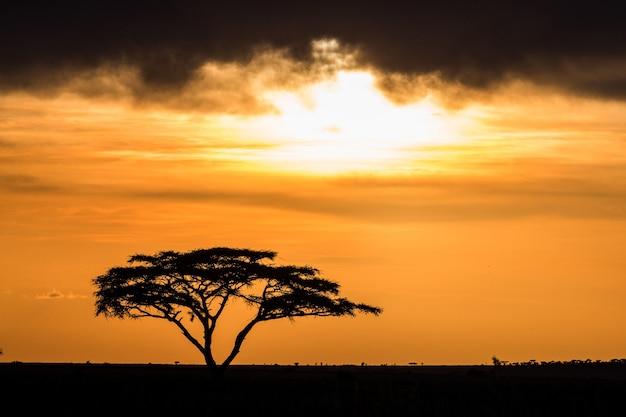 見事な夕日を背景にサバンナの孤独な木。古典的なアフリカの夕日。東アフリカ。