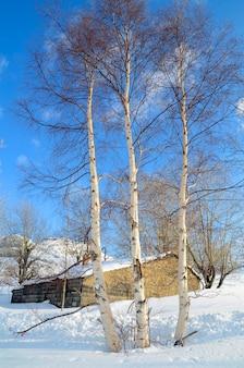 Возле заснеженного домика в долине пас растут березы.