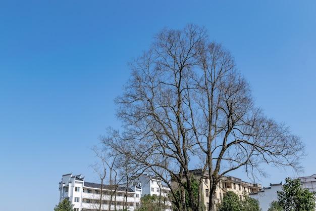 街中には枯れ木が灯籠を吊るしている