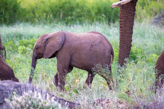Некоторые слоны ходят среди деревьев и кустарников