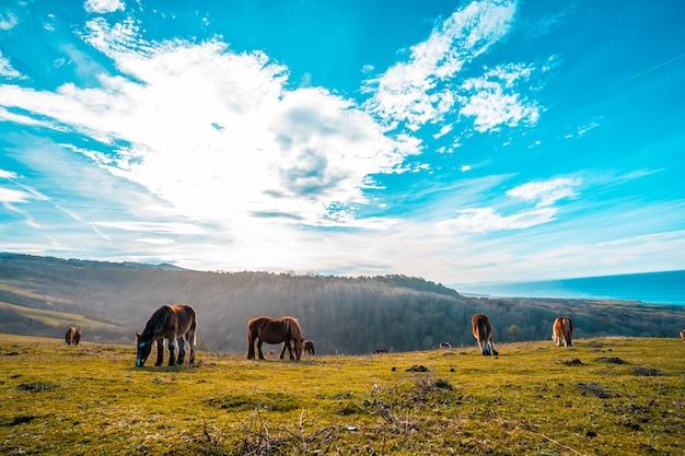 Несколько свободных лошадей на горе джайзкибель, гипускоа. испания