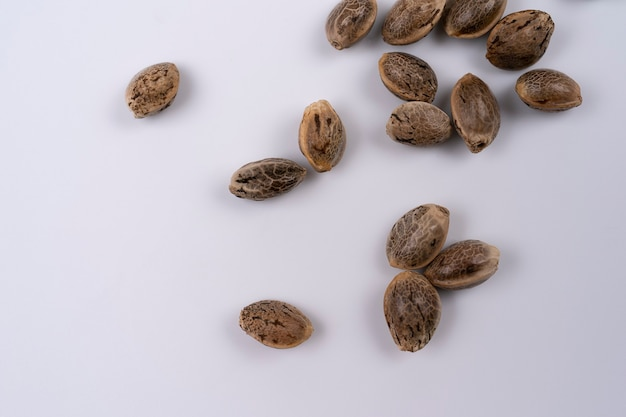 Some hemp seeds spread out on white background seen from above small group of hemp seeds spread out