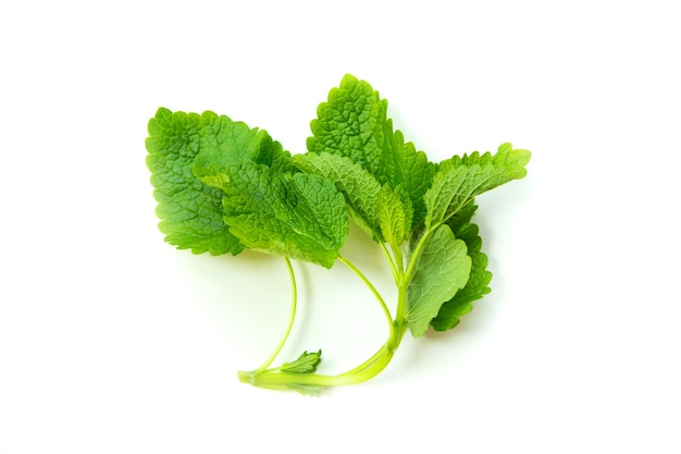 Some lemon balm isolated on white.