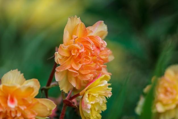いくつかのオレンジ色の花