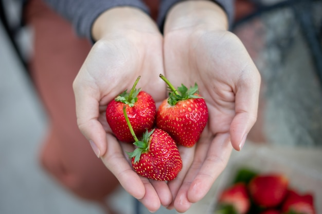Some red strawberries are in a hand. it is fresh, tasty and sweet fruit.