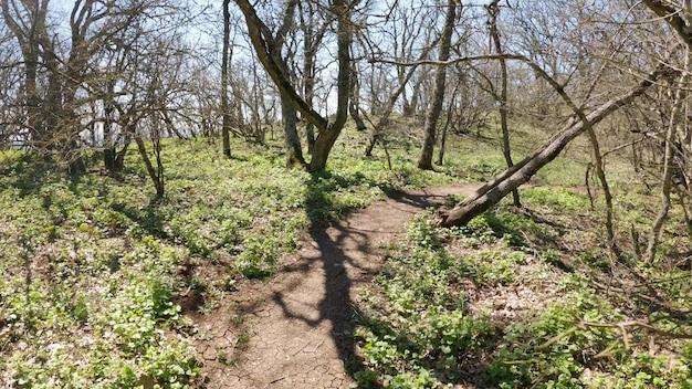 誰かが葉のない木々のある森を歩きます。フォレストトレイル。 pov。 4k uhd