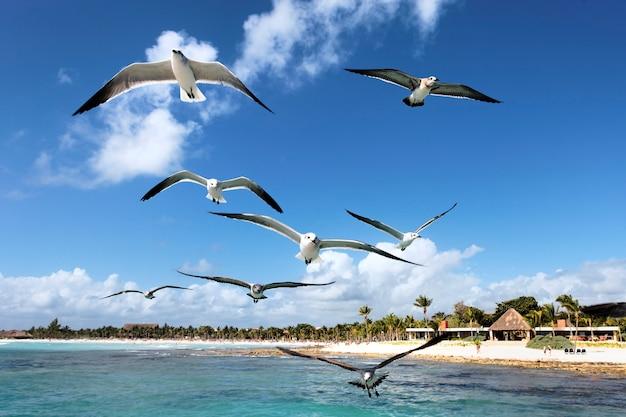 メキシコの青い空を飛んでいるいくつかのカモメ
