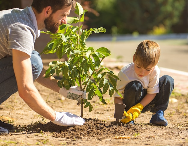 The son and a father plant a tree