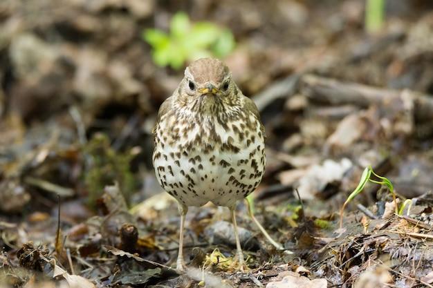 Певчая птица на траве