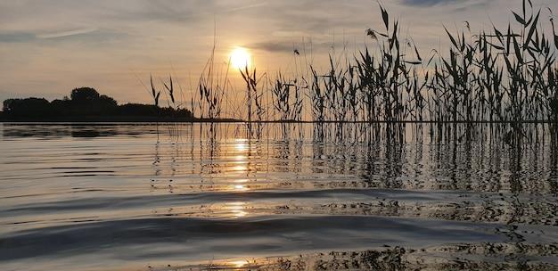 夕日を背景にブロンズの夕焼けに波と葦のある夏の湖のなだめるような絵のような風景。野生動物の美しさの概念