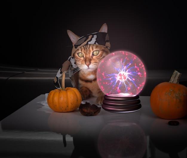 수정 구슬 근처의 점쟁이 고양이. 신비로운 분위기. 운명을 예측하는 수정 구슬. 미래에 대한 추측.