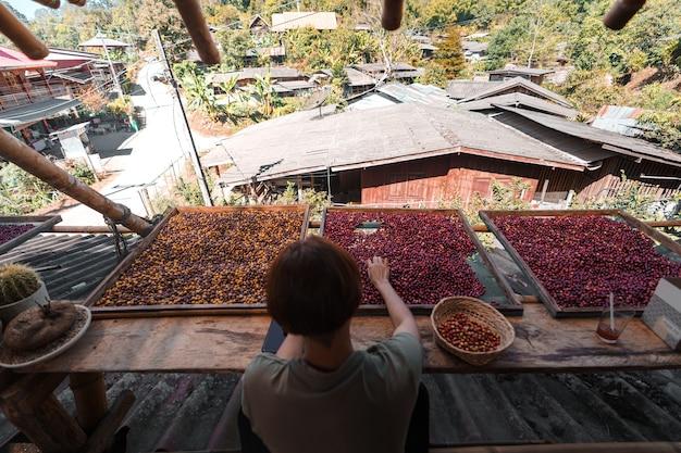 Сортировка кофейных зерен вишня, руки сортировки кофейных зерен