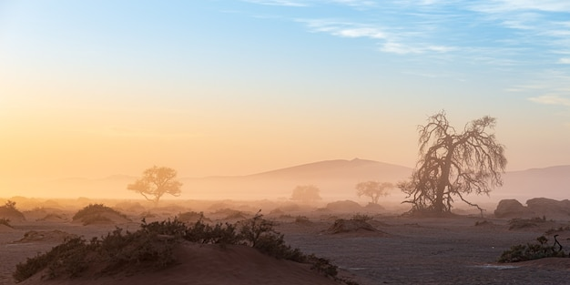 Sossusvlei, namibia. acacia tree and sand dunes in morning light, mist and fog