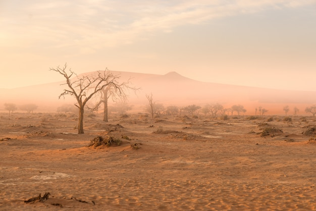 Sossusvlei, namibia. acacia tree and sand dunes in morning light, mist and fog.
