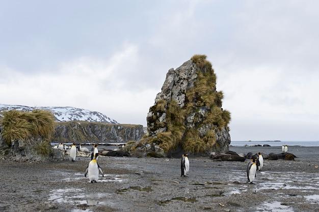 キングペンギンのいるサウスジョージア州の風景