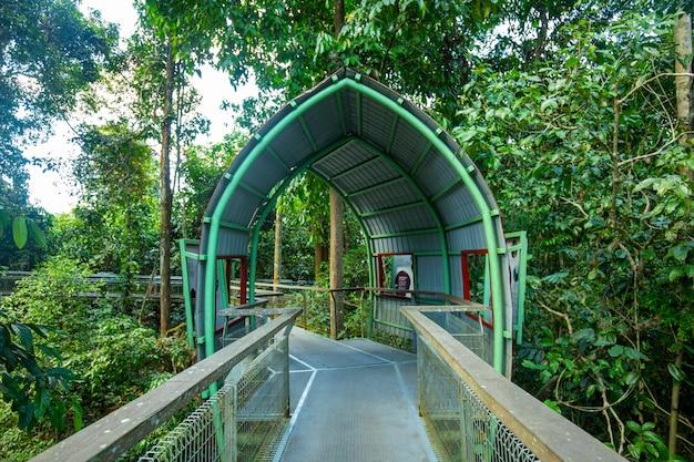 東南アジア、観光名所、マレーシア、ボルネオ、サバ、サンダカン、森林遊歩道