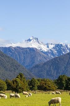 Южные альпы вид на гору кук и гору тасман южный остров новая зеландия