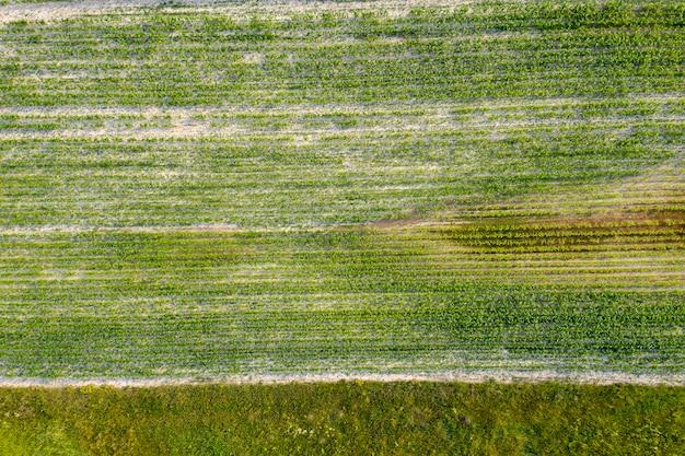 上から見た農地の播種