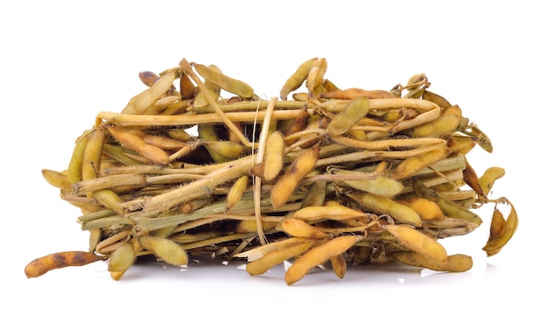 Soy bean isolated