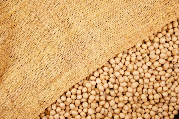 Soybean beans background