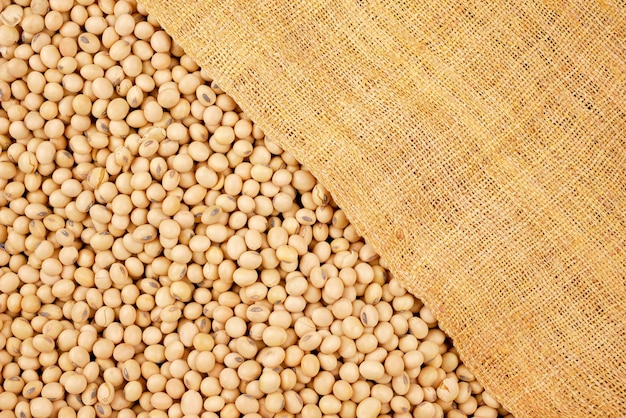 Soybean beans, seeds food raw material, delicious dishes seed bean agricultural product
