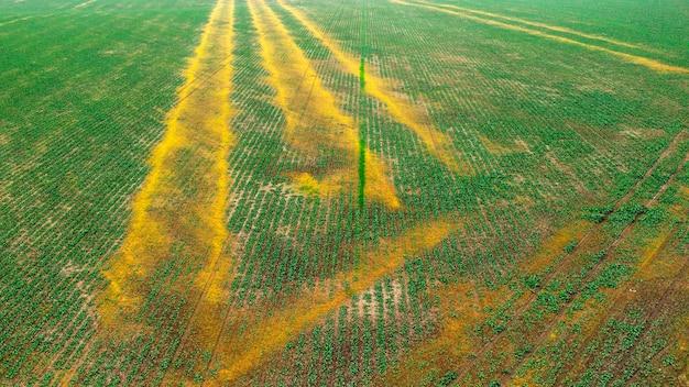 肥料の不適切な施用により大豆作物が被害を受ける