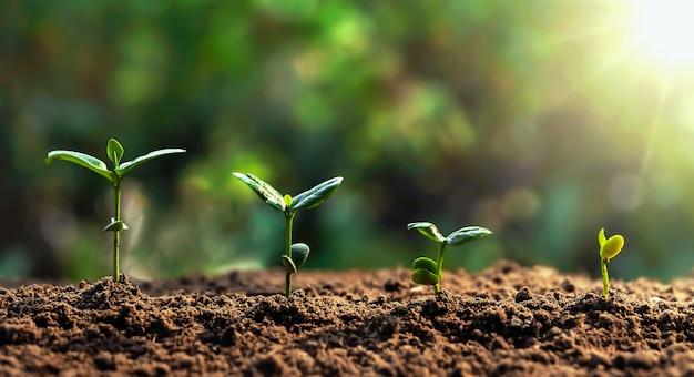 녹색 잎 농장에서 콩 성장. 농업 식물 시드 성장 단계 개념