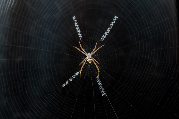 クモの巣にspが登る