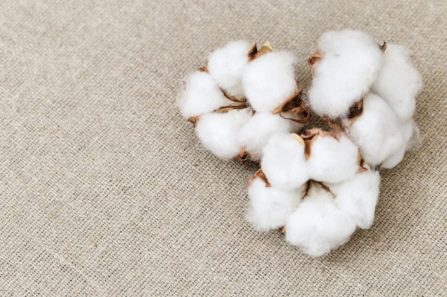 Spa background. beautiful white flowers of cotton plant on rough textural linen cloth. spa setting.
