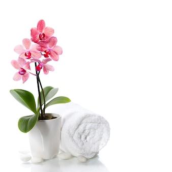 白地に美しいピンクの蘭とスパ組成