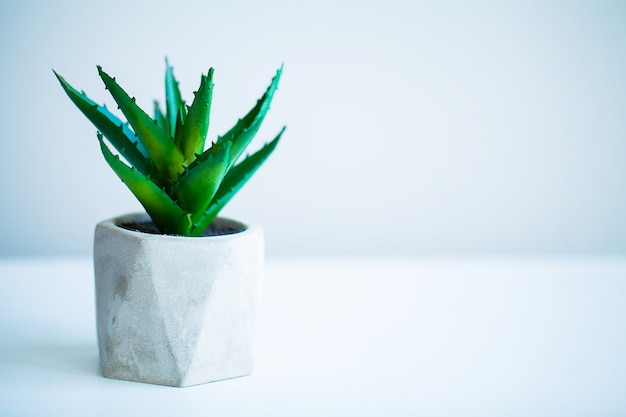 Spa concept, aloe vera plant on table in bathroom