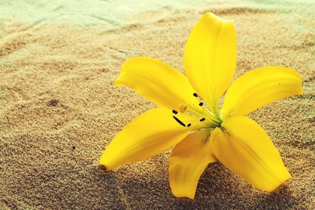 スパコンセプト。砂の上に美しい黄色の蘭の花。水平。スペースをコピーします。