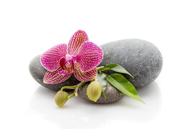 스파 masage 돌과 난초 흰색 배경에 고립.