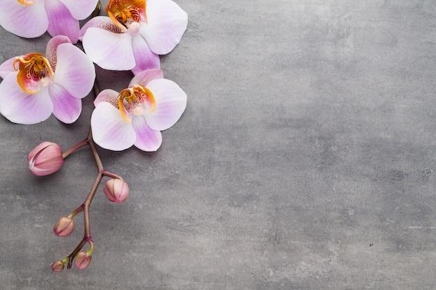 灰色の背景にスパ蘭の花