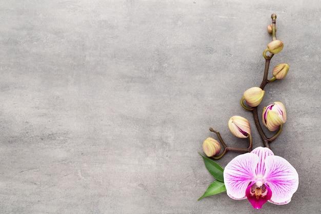 Спа объекты темы орхидеи на сером фоне.