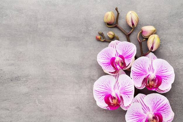 Спа объекты темы орхидеи на сером фоне