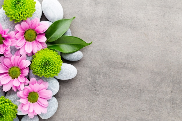 灰色の背景にスパの石と花 Premium写真