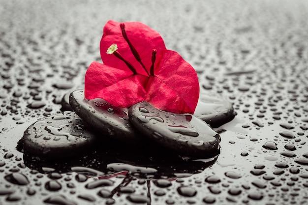 스파 돌과 난초 꽃. 스톤 마사지. 어두운 배경 위에 검은 현무암 돌