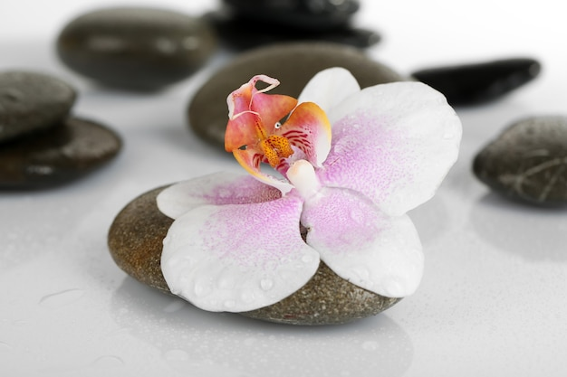 Spa stones with orchid on light surface