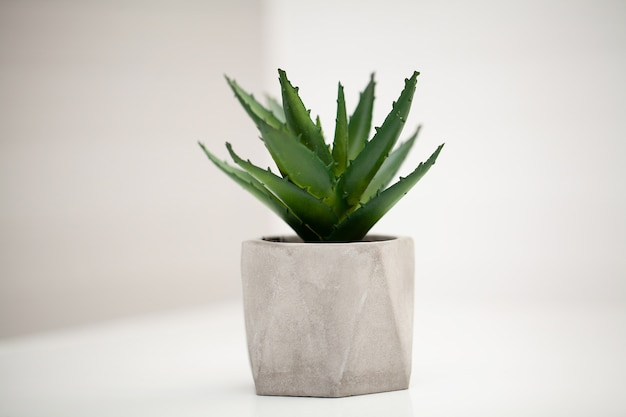 Spa. succulent plant on window ledge in modern bathroom