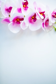 Spa and wellness scene. orchid flower on the wooden pastel background with copyspace