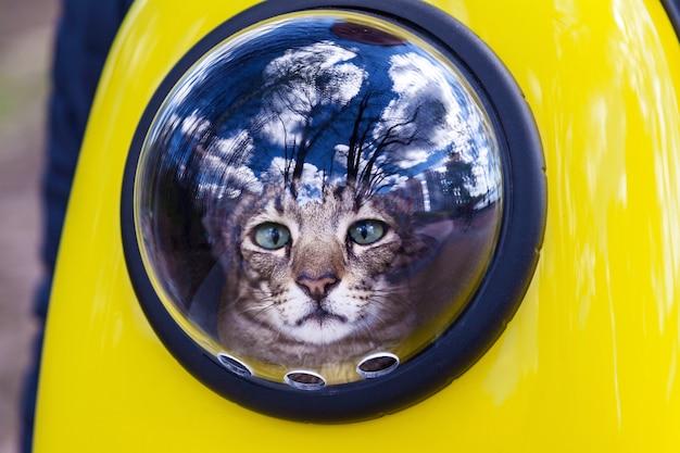 キャットトラベラーのためのスペースバックパック猫が歩いている窓の外を見ている黄色のバックパックの中を歩く