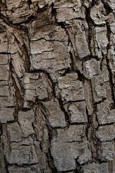 木の樹皮の質感を持つ空間